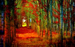 Wallpapers Forest Path Autumn Hd Free 1920x1200 | #2392190 # forest 759