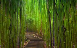 cool forest path wallpaper 32567 33314 hd wallpapers jpg 281