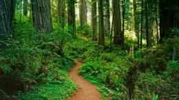 Forest Path Wallpaper 1920x1080 Forest, Path, California, National 1298