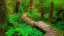 Wood walkway forest trees trail beautiful HD Wallpaper 1839