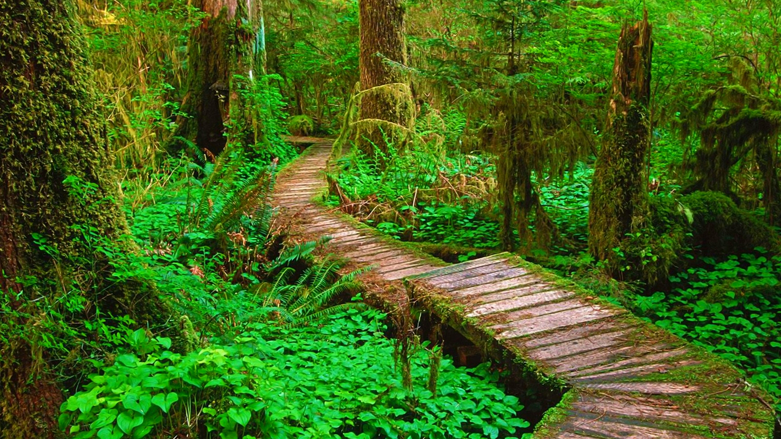 22 Wood walkway forest trees trail beautiful HD Wallpaper 1839 :: Forest Path Hd Wallpapers