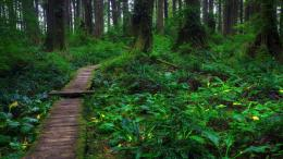 forest path wallpaper resolution 1920x1080 categories 4k wallpapers hd 1330