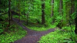Forest Path Wallpaper 1920x1080 Forest, Path, Fork 460