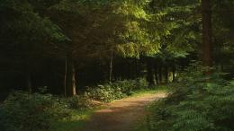 Download Landscapes Forest Path Fresh New HD Wallpaper 518