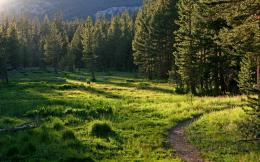 Amazing Nature Forest Trail Background Wallpaper HD Picture Download 1446