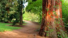 Forest Path HD Wallpaper 982