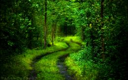 Forest Path HD Wallpapers 601