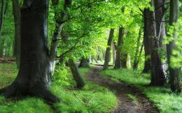 Green forest path Wallpapers Pictures Photos Images 548