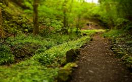 Beautiful Forest path HD Wallpapers 1452