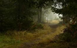 Image: Deep Forest Path wallpapers and stock photos 1933