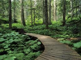 1600x1200 Forest trail desktop PC and Mac wallpaper 1277