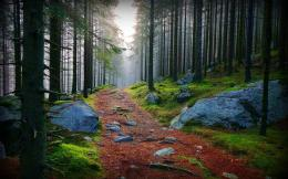 Nature Forest Forest path 033595jpg 574