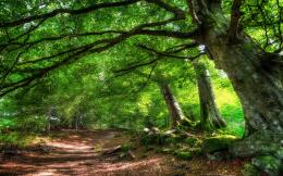 Home » Nature »Forest trail of green trees HD Desktop Wallpaper 1527