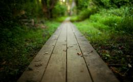 Download, Wooden Path, Forest, Green, Focus, HD Wallpaper 571