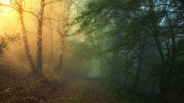 Mysterious forest path leaves fog nature HD Wallpaper 803