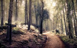 natural forest path high resolution wallpaper download forest path 319