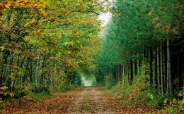 Amazing Forest path HD Wallpapers 1167