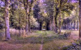 Abstract forest path full hd wallpaper 1155