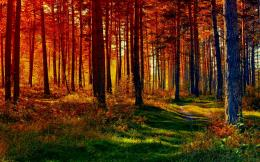 Fall forest nature path HD Wallpaper 1596