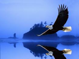 anger eagle bird wallpaper latest eagle bird wallpaper eagle bird 1477