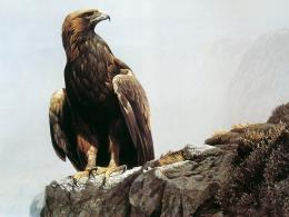 Golden Eagle Wallpaper 8743 Hd Wallpapers 756
