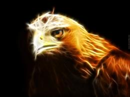 Golden Eagle Wallpaper 8424 Hd Wallpapers 971
