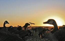 duck hunting goose hunting north dakota goose and duck hunting 2005 662