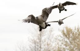 Waterfowl Hunting Fishing Guides Photos 277