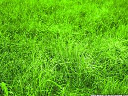 green nature green grass 17 background HD wallpaper1 jpg 1747
