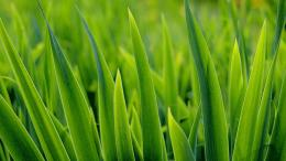 green , grass , closeup 952