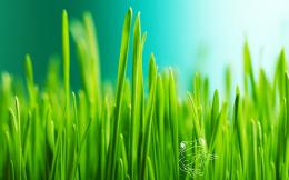 Green Grass Hd Wallpaper 1845