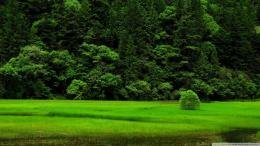 Beautiful Green Grass HD Wallpapers 876