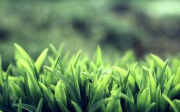 Green Grass Macro HD Wallpapers 1678