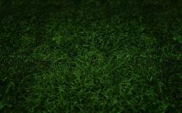 Green Grass HD wallpaper 1545