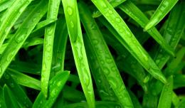 Green Grass Fresh New Hd Wallpaper 1048
