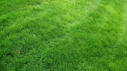 Top 5 Green Grass Beautiful Wallpapers 1553