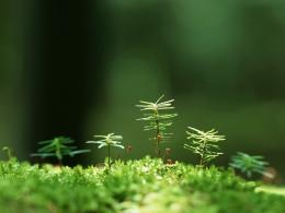 Macro green grass HD wallpaper 215