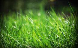 Green Grass HD Wallpaper 577