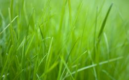 Green Grass HD Wallpaper 539