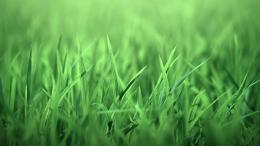 nature, grass, green grass 692