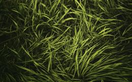 Green Grass HD Wallpaper 346