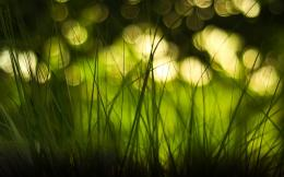 Grass and Blurred Bokeh Lights HD Nature Wallpaper 1635