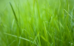 Green Grass Wallpapers 119