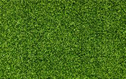 Download Green grass texture High quality wallpaper 841