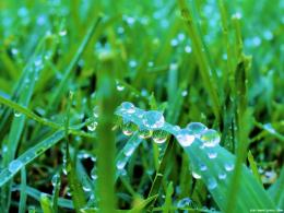 Green Grass Wallpaper 1100