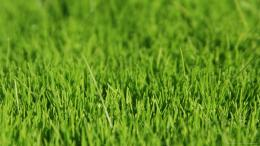 green grass backgrounds wallpaper 1920x1080 1501