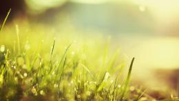 GREEN GRASS HD WALLPAPER 1928