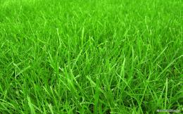 Grass wallpaper, grass cloth wallpaper, grass paper wallpaper 175