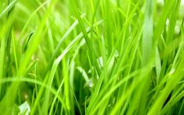 Bright Green Grass Hd Wallpaper Placecom Picture 1605