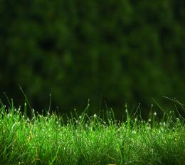 green grass hd 1440x1280 free Screensaver wallpaper 1566